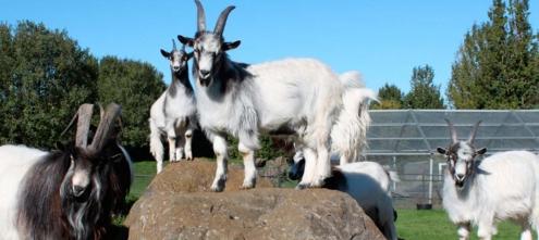 Húsdýragarðurinn